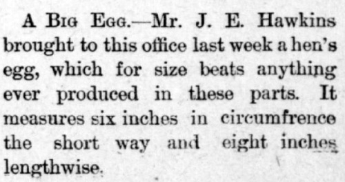 """Clipping reads: """"A Big Egg - Mr. J.E. Hawkins brought to this office last week a hen's egg, which for the size beats anything ever produced in these parts. It measures six inches in circumference the short way and eight inches lengthwise."""""""